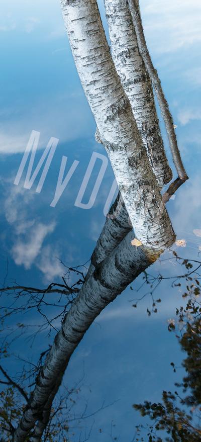 Liune MyDoor by Susanna: UpsideDown